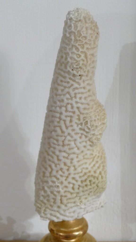 Corail Sur Socle En Bois Doré